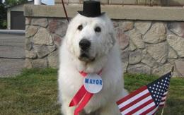 Chuyện thật không đùa: những chú chó, mèo được làm thị trưởng