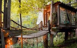 Bên trong ngôi nhà trên cây mộng mơ đang gây sốt trên Airbnb, hàng trăm nghìn người muốn được tới thăm một lần