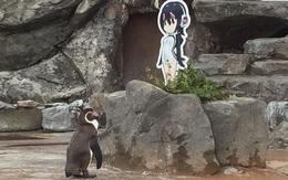 Bị vợ bỏ theo trai trẻ, chàng chim cánh cụt quay sang yêu... tấm bìa các-tông