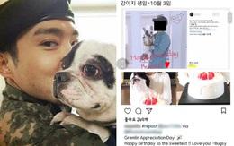 Netizen phẫn nộ vì gia đình Siwon tiếp tục thả chó, tổ chức sinh nhật cho thú cưng sau sự cố cắn CEO