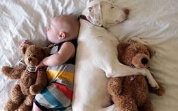 Tình bạn ấm áp của em bé và chú chó từng là nạn nhân của nạn bạo hành động vật