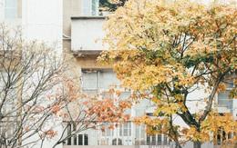 Hà Nội những ngày này lãng mạn đến lạ trong sắc vàng của mùa cây thay lá