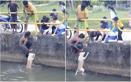 Chàng trai quên mình cứu chú chó đang chới với giữa dòng nước khiến nhiều người xúc động