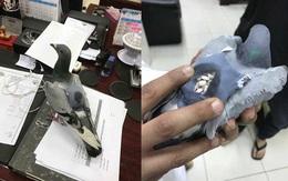 Bắt được con chim bồ câu đang đem 178 viên ma túy đi bán