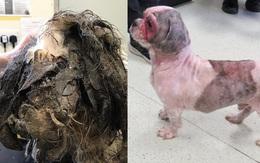 Chú chó đáng thương bị đổ keo bê bết lên người, chân dính chặt vào tai