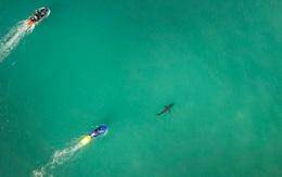Cá mập bất ngờ xuất hiện gần vận động viên lướt sóng tại đúng nơi diễn ra sự việc này cách đây 2 năm
