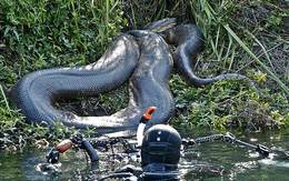 """Những hình ảnh chân thực nhất về """"quái vật sông Amazon"""" từ người thợ lặn dũng cảm không bảo hộ"""