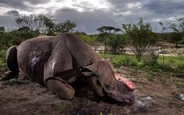 Đằng sau bức ảnh danh tiếng này là câu chuyện ám ảnh về nỗi đau tột cùng của chú tê giác