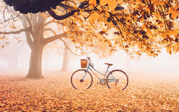 Khung cảnh thu lá vàng xuyến xao lòng người: Đâu phải ngẫu nhiên mà chúng ta yêu mùa thu đến vậy