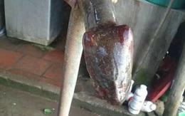 Sự thật con vật đầu rắn mình lươn cực độc khiến dân mạng xôn xao