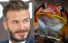 Những nỗi ám ảnh kỳ quặc của Beckham, Ronaldo và sao bóng đá