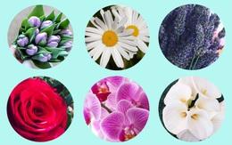 Chọn loài hoa yêu thích để khám phá tính cách mỗi người
