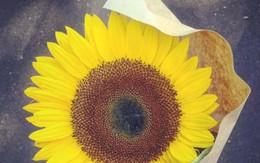 Tặng hoa hướng dương cho cô gái đang lặng lẽ khóc, người đàn ông không ngờ bản thân mình lại thay đổi