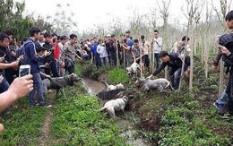 """Chó săn và lợn rừng """"tử chiến"""": Hành động đầy phản cảm, gây nguy hiểm không thể chấp nhận"""