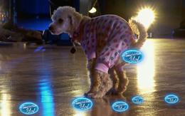 """Cận cảnh """"American Idol"""" bị náo loạn bởi một chú cún cứ chạy lòng vòng... phóng uế"""