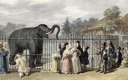 Sở thú đen tối đáng sợ tại London vào thế kỷ 18: tặng chó mèo cho sư tử để đổi lấy vé vào xem