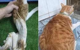 Hành trình hồi sinh của chú mèo hoang sắp chết: Nợ cậu chủ tốt bụng một lời cảm ơn!