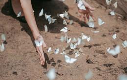 Rừng Cúc Phương vào mùa bướm: Đẹp như một giấc mơ