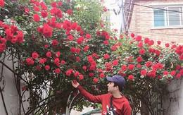 'Căn nhà với cánh cổng hoa hồng' đang được cư dân mạng chia sẻ mạnh vì lãng mạn không chịu nổi