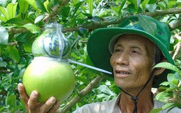 """Trái cây miền Tây in chữ """"Phúc - Lộc - Thọ"""" đắt hàng trước Tết"""
