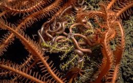"""""""Hai vạn dặm"""" dưới đáy vịnh Mexico: Cả một thế giới hùng vĩ từ một hành tinh khác"""