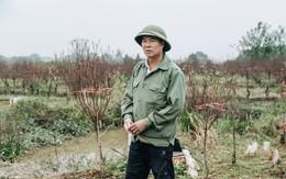 """Gần 200 gốc đào của người dân Bắc Ninh bị chặt phá trong đêm: """"Tết năm nay còn chả có bánh chưng mà ăn"""""""