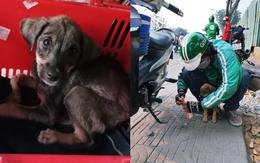 Câu chuyện dễ thương: Chú cún gầy trơ xương nằm bơ vơ bên đường và hành động ấm áp của anh tài xế xe ôm