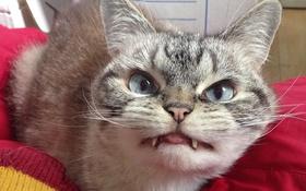 Gặp gỡ cô mèo ma ca rồng đáng yêu nhất thế giới ảo
