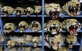 Bên trong kho chứa động vật quý hiếm lớn nhất thế giới