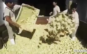 Clip 9 triệu gà con bị đem đi tiêu hủy gây dậy sóng mạng xã hội