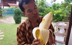 """Giải mã giống chuối """"thành tinh"""" to bằng... cổ chân ở Papua New Guinea"""