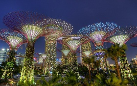 Rừng xanh sâu thẳm ngay giữa lòng thành phố Singapore