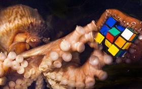 7 lý do biến bạch tuộc thành sinh vật thông minh nhất dưới biển, hơn cả cá heo