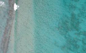 Mỗi chấm đen kia là 1 con cá mập dài 2m!