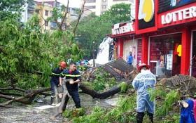 Hà Nội: Không thể nói cây đổ trong bão số 1 là do sai quy trình