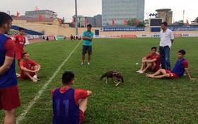 Cầu thủ Thanh Hóa tổ chức đá gà ngay trên sân tập