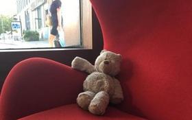 Chú gấu bông cũ mèm bị bỏ quên trong khách sạn và cái kết không thể tuyệt vời hơn