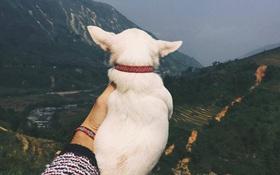 """Dắt tay """"gấu"""" đi muôn nơi xưa rồi, giờ phải dắt tay cún mới đúng bài cơ!"""