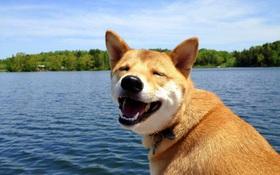 14 lý do chứng minh người yêu có thể không có nhưng chó nhất định phải có một con