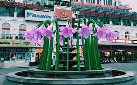 Người Hà Nội ngỡ ngàng tranh cãi không biết hoa này là hoa gì?