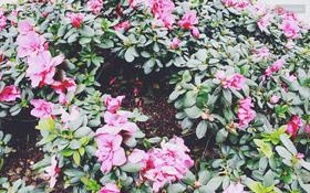 """Cận cảnh những thảm hoa ở bên hồ Hoàn Kiếm """"thủng lỗ chỗ"""" vì bị lấy trộm"""