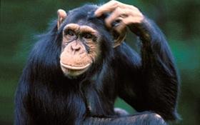 """Tinh tinh """"già"""" hơn con người cả triệu năm"""