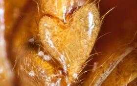 Phát hiện loài bọ cánh cứng có đốt chân hình trái tim