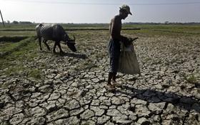 Thế giới sắp hết gạo