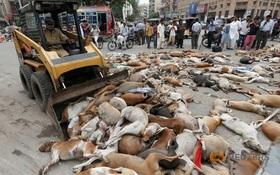 Hơn 700 con chó bị giết, phơi xác trên đường phố Pakistan