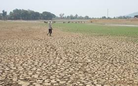 Nắng nóng lịch sử, các tỉnh Tây Nguyên công bố thiên tai