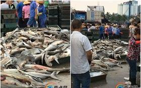 Phẫn nộ khi cá mập quý hiếm được bày bán la liệt với giá như cho ở chợ trời Trung Quốc
