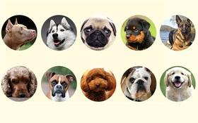 Chọn loài chó yêu thích để đọc được tính cách mỗi người