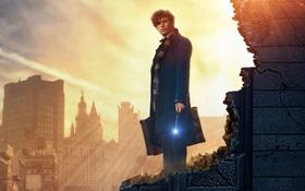 Fantastic Beasts and Where to Find Them – Chuyến tàu trở về với thế giới phù thủy đầy màu sắc