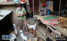 Người phụ nữ nhân hậu tình nguyện chăm sóc 220 chú chó hoang mà không hề ca thán